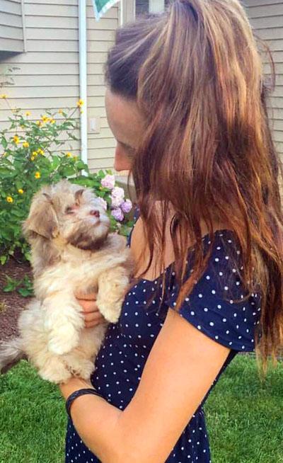 Havanese Puppy Lucy Adoption