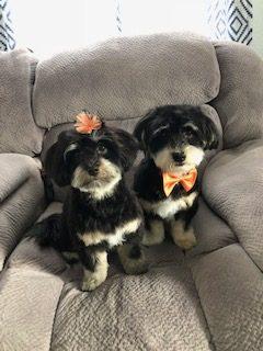 Stanley & Ebbie