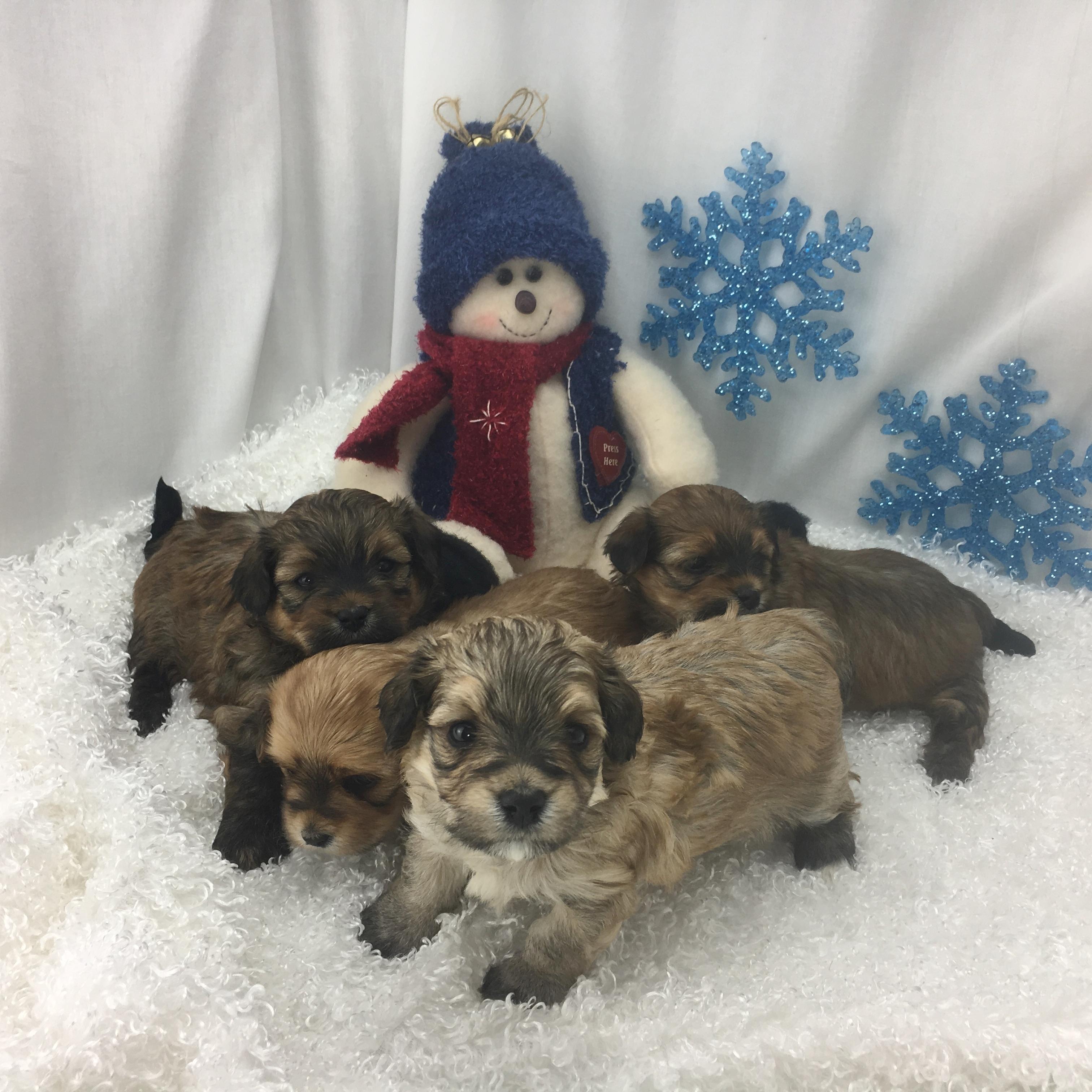 Annie's Pups 2