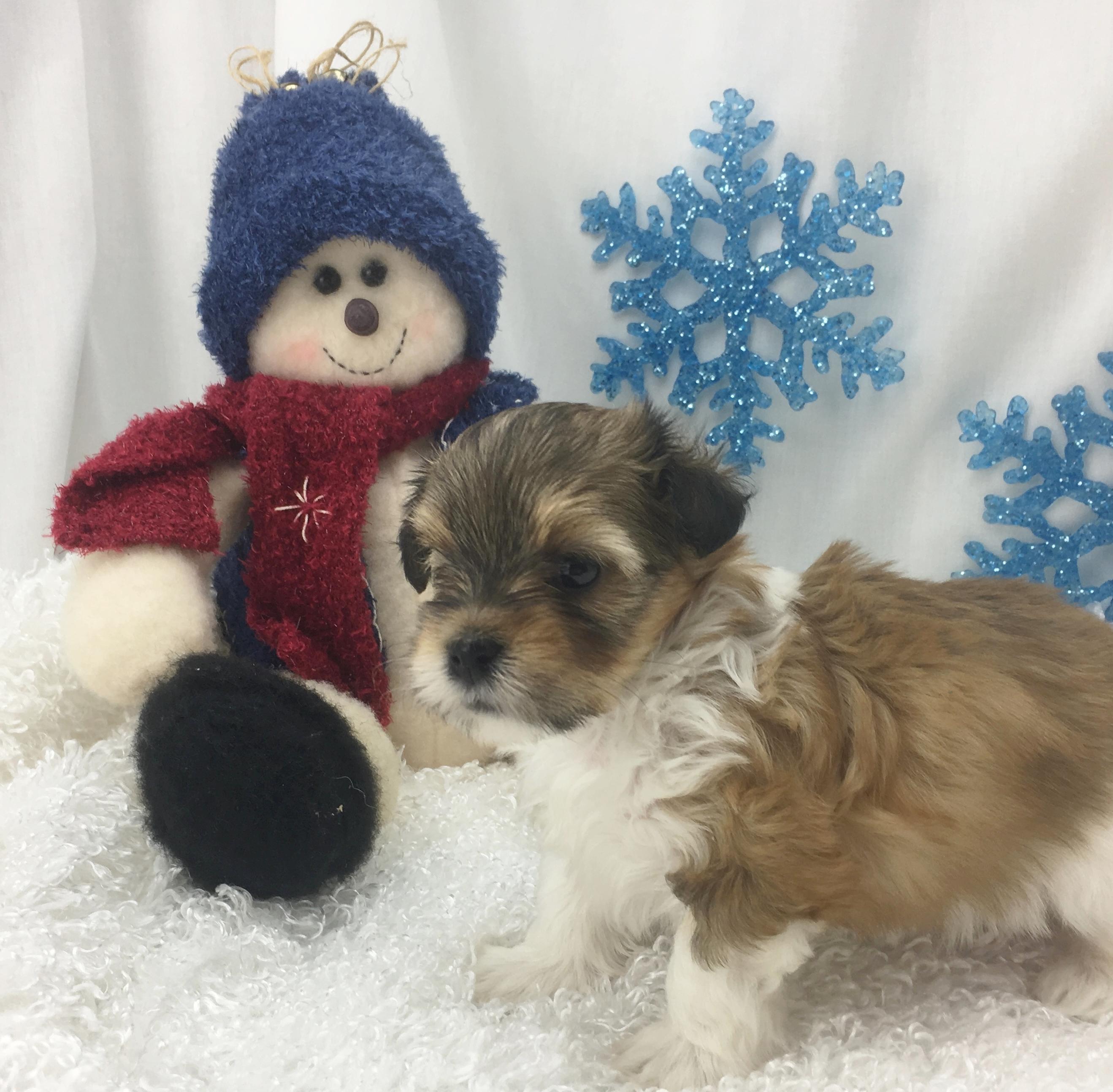 Freda's Pup 1 - Fancy