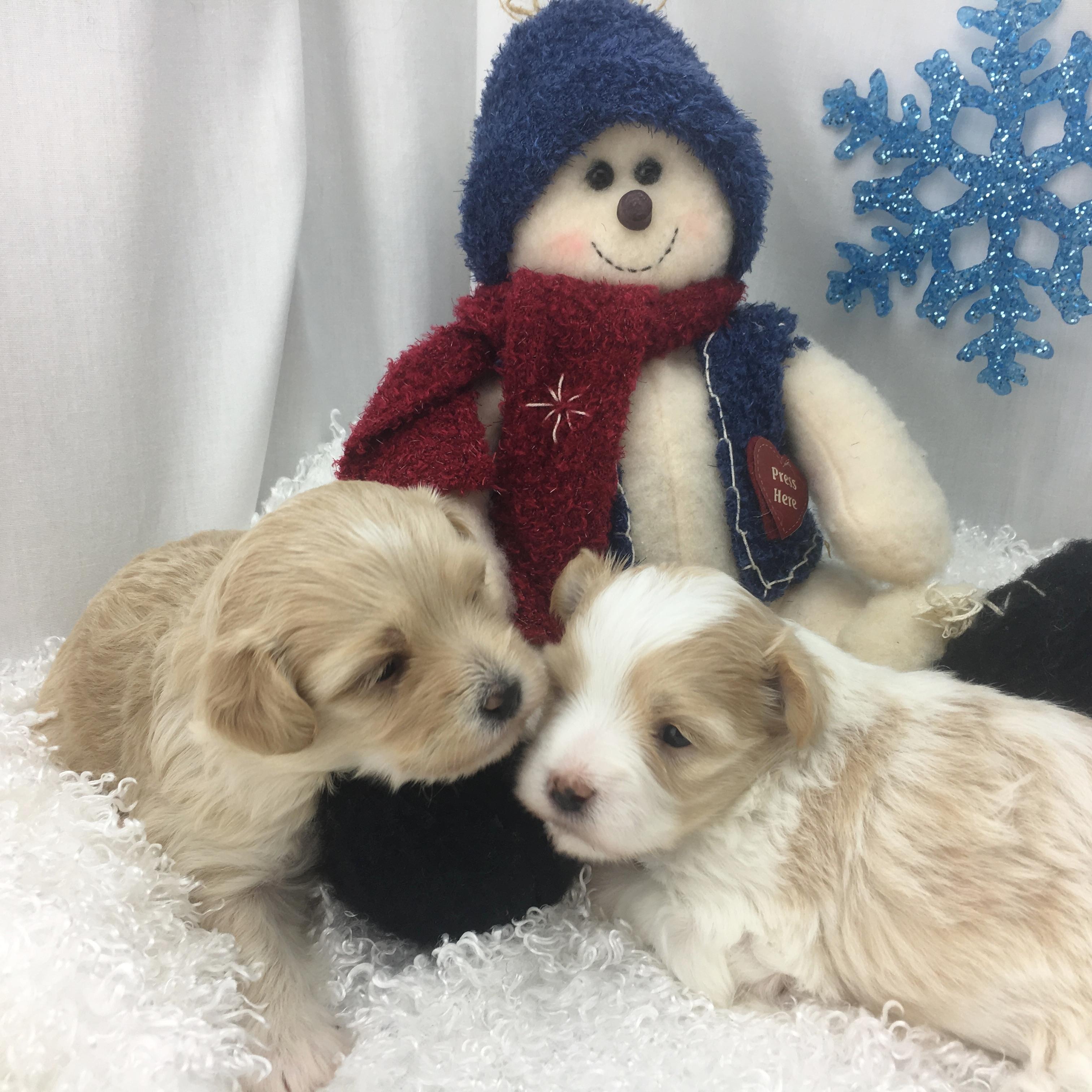 Happy's Pups 5