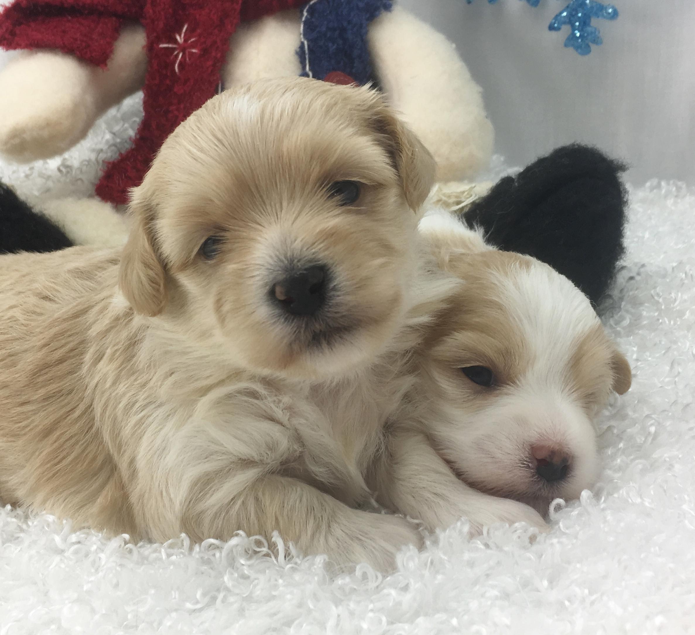 Happy's Pups 4