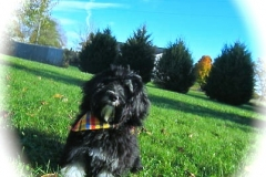 hava_havanese_puppy_set2_(10)