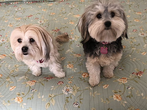 Daisy-and-Winnie-2019-Update_500